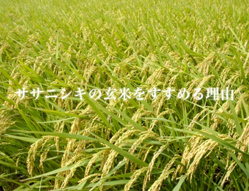 ササニシキの玄米をすすめる理由